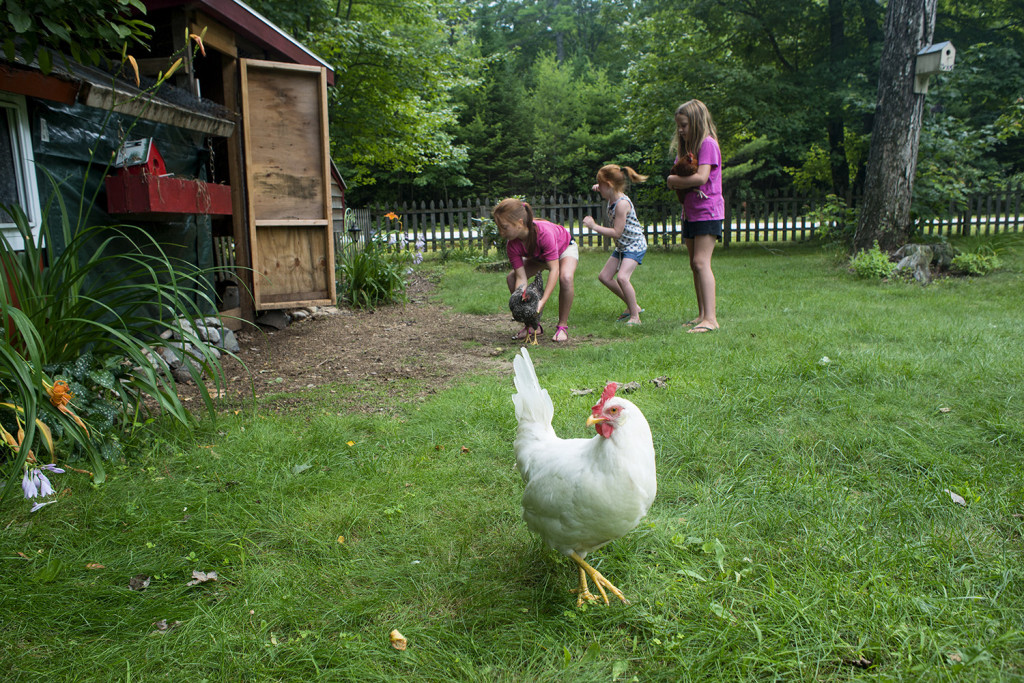 Ava Gleason (from left), and her sisters, Poppi and Maezy Gleason corral their chickens around the front yard.