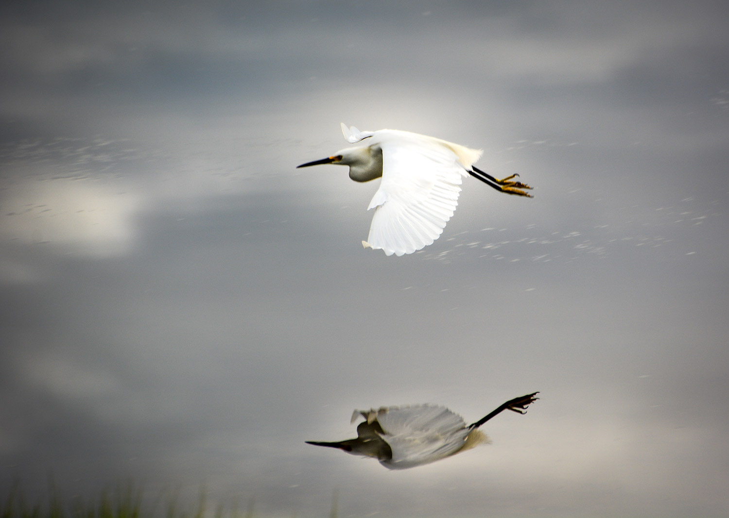 Upon further reflection, that's a nice snowy egret flying low over the Scarborough Marsh where Ann Blanchard has taken many fine photos over the years.