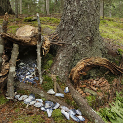 A fairy house at the base of a tree with a walkway and floor of mussel shells.