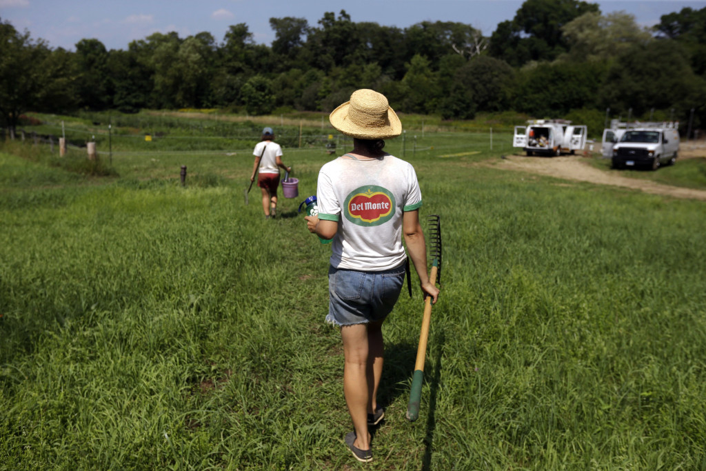 Farmers Fay Strongin, 26, foreground, and Sarah Turkus, 26, both of Providence, R.I., carry tools as they walk into fields cultivated by the Sidewalk Ends Farm in Seekonk, Mass. Across New England, the number of farms has grown by 5 percent since 2007, contrary to the national trend.