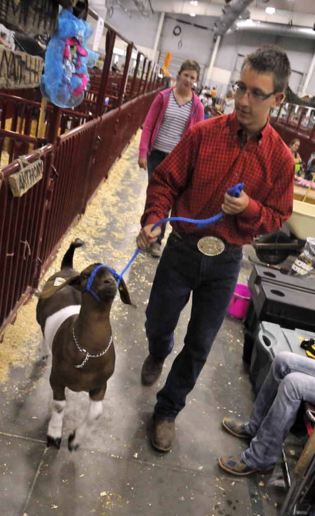 David Smith, from Niwot, Colorado, walks his goat back to the pen after claiming the grand champion title at the Weld County Fair on July 23, 2014, in Greeley, Colo. The Associated Press