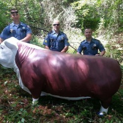Law enforcement officers pose for a photo with Charlie the steer after he was found on a small island off the Androscoggin River in Auburn.