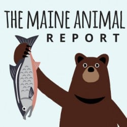 animal-report-icon