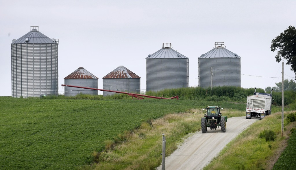 A farmer drives his tractor past a soybean field toward grain storage bins near Ladora, Iowa, in this Aug. 5, 2014, photo. The nation's corn and soybean farmers are on track to produce record crops this year as a mild summer has provided optimum growing conditions. The Associated Press