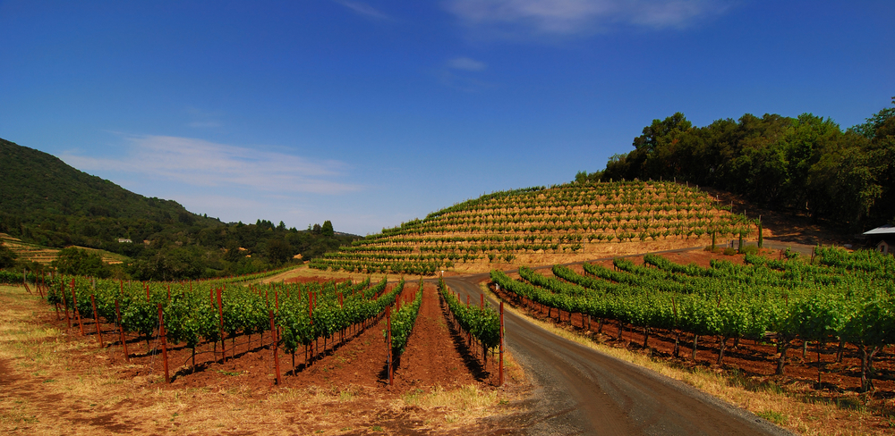 A biodynamic vineyard in Sonoma, California