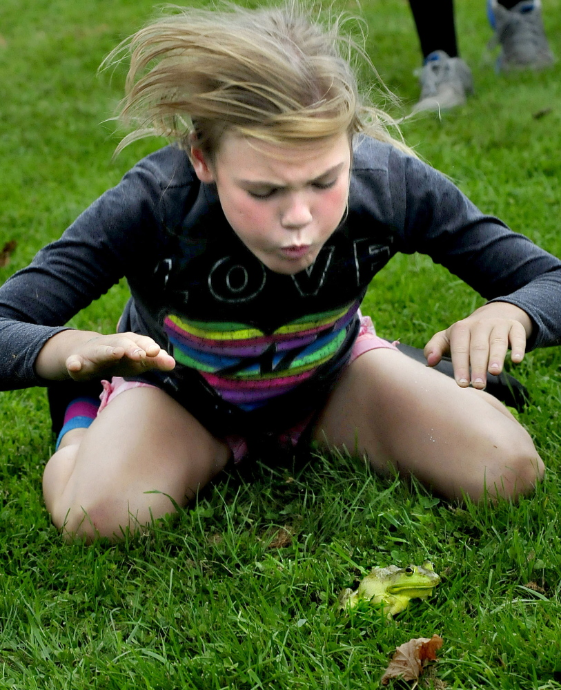 Brianna Michaud urges her bullfrog Kermit to jump by blowing and hitting the ground during a spirited frog jumping contest during the Oosoola Fun Day in Norridgewock on Monday. Briana and Kermit were the winners in the 9-11 age group. Kennebec Journal Staff Photo by David Leaming