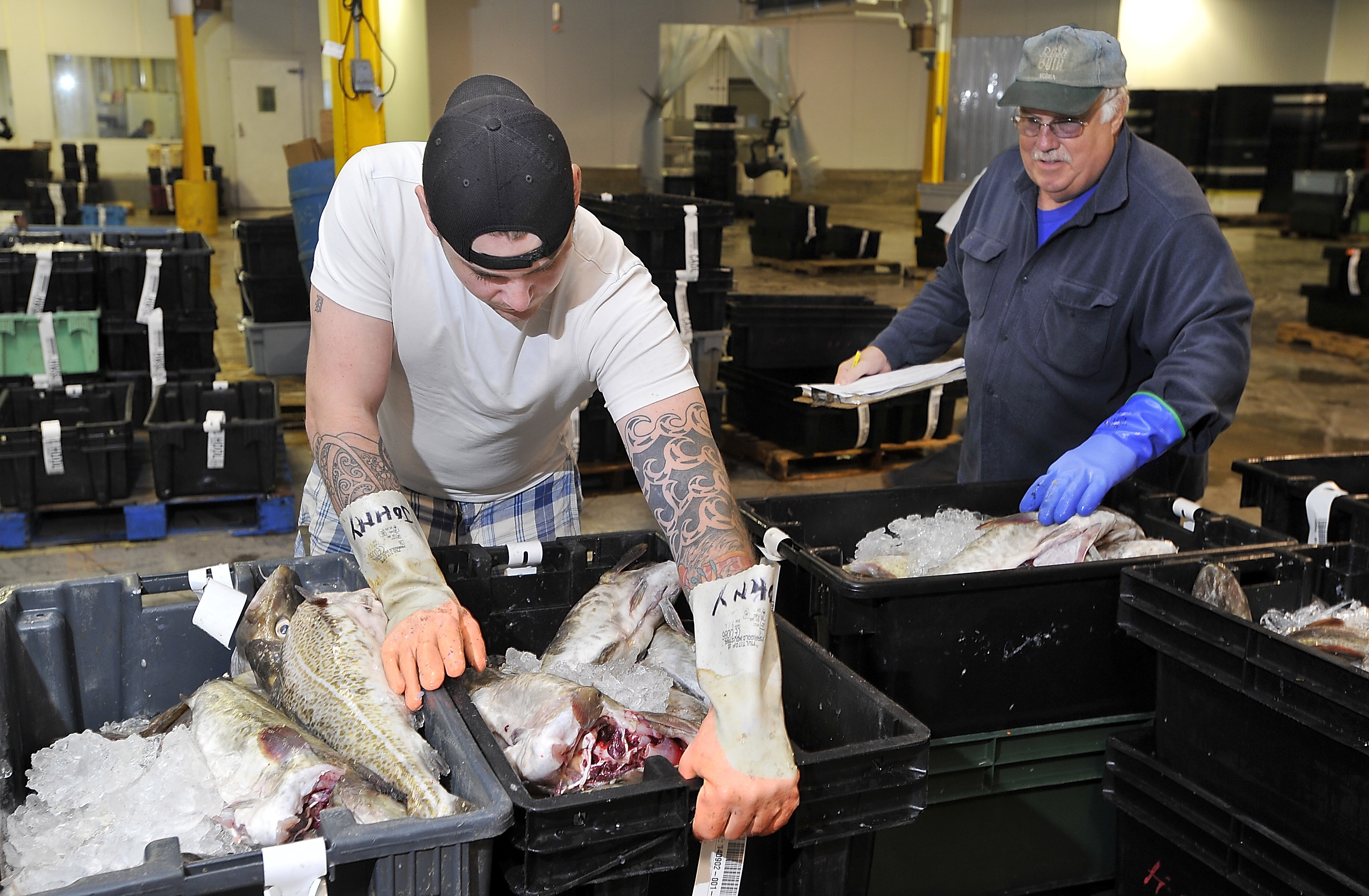 Scientists, fishermen at odds on cod stock in Gulf of Maine