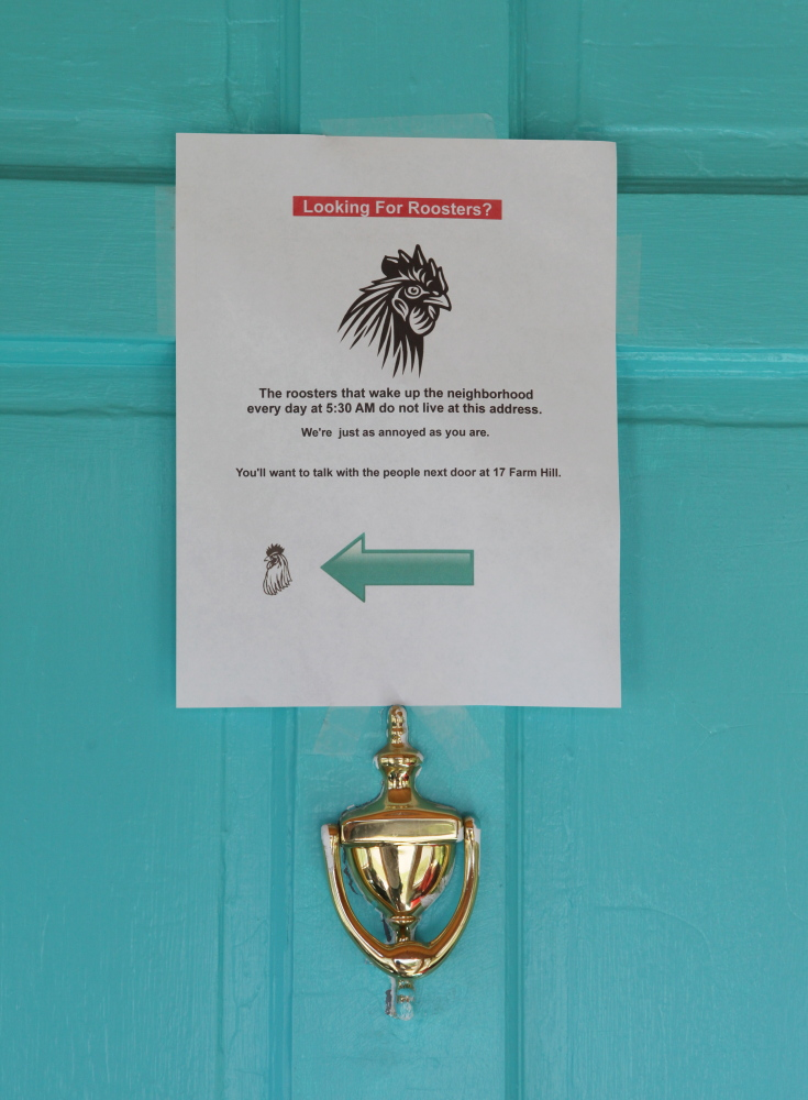 A notice posted on a door in Cape Elizabeth directs inquiries about a neighborhood rooster to another address. Photo by Kelley Bouchard / Staff Writer