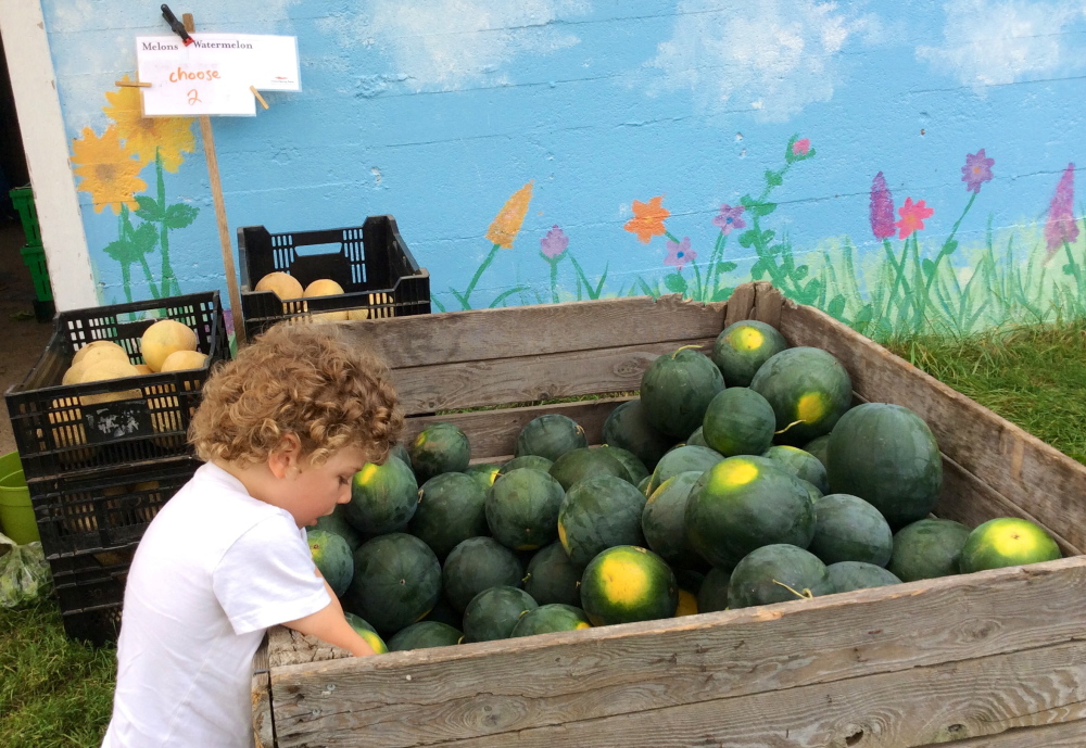Theo picks out a melon at Crystal Spring Farm in Brunswick.