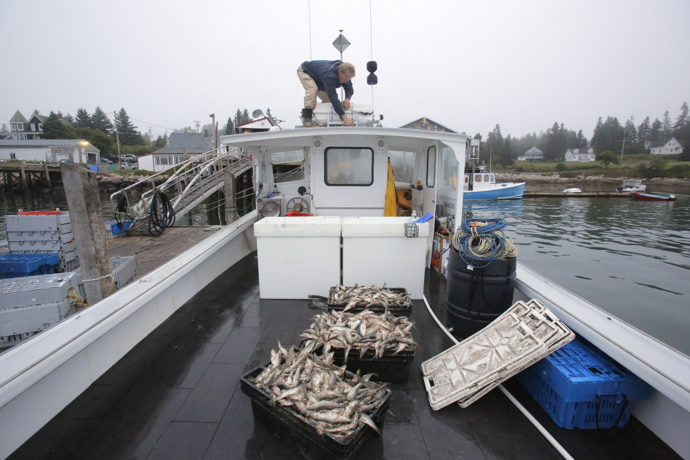 Frank Gotwals secures a life raft atop the cabin of his boat in Stonington Harbor while preparing to head out for a day of lobstering. Gregory Rec/Staff Photographer