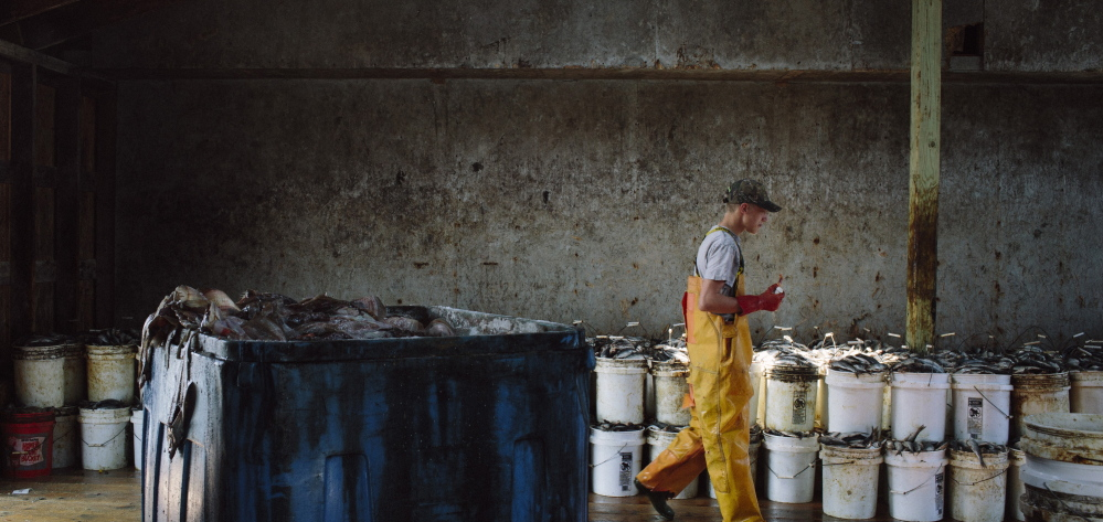 A worker packages herring at a Jonesport fishing wharf last month. Working people in low-wage jobs frequently lack health insurance.