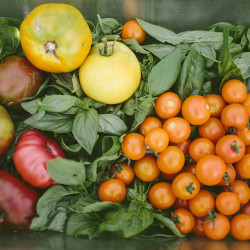 Tomatoes and basil from Round Top Farm.