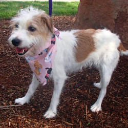 Gidget ,who went missing in April in Philadelphia and turned up in Portland. Ore.
