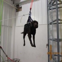 A Maine State Police dog trained to sniff out explosives stays calm as it is hoisted up at Sterling Rope Co. in Biddeford. The team members were training to board maritime vessels, where the only means of getting the dogs aboard often is to hoist them on ropes.