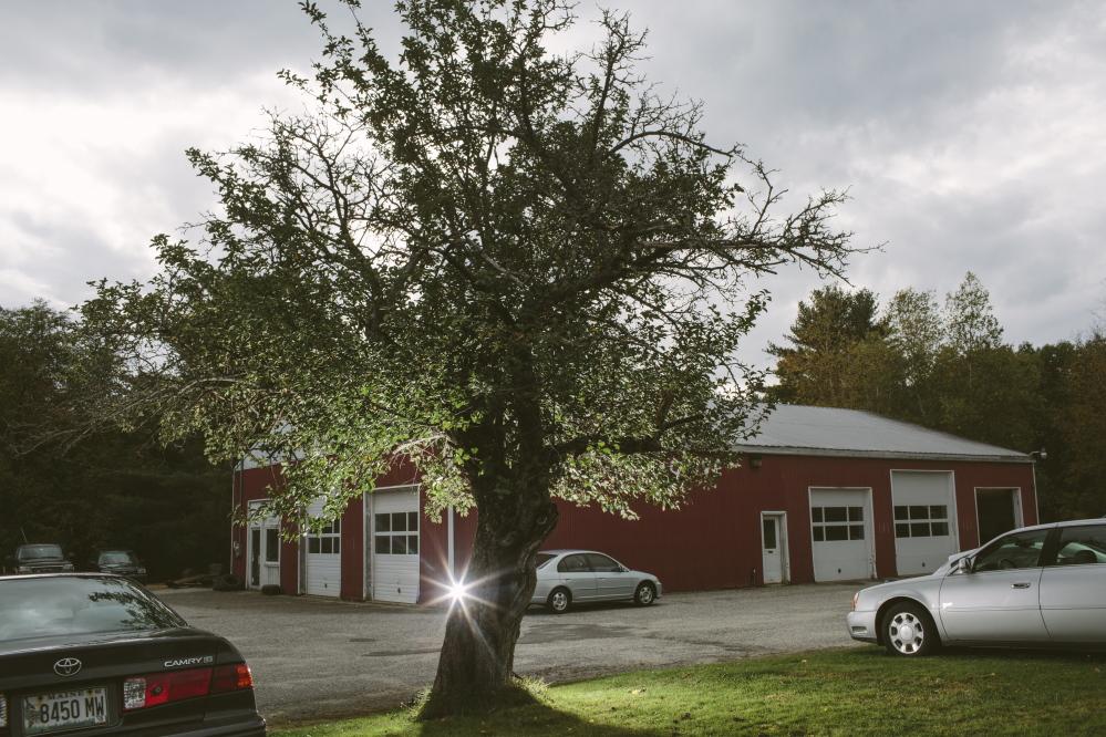 A Kavanagh apple tree stands next to R & D Automotive in Freeport. It is believed to be one of very few Kavanaghs left in Maine, and could have been planted during the Civil War era. Whitney Hayward/Staff Photographer