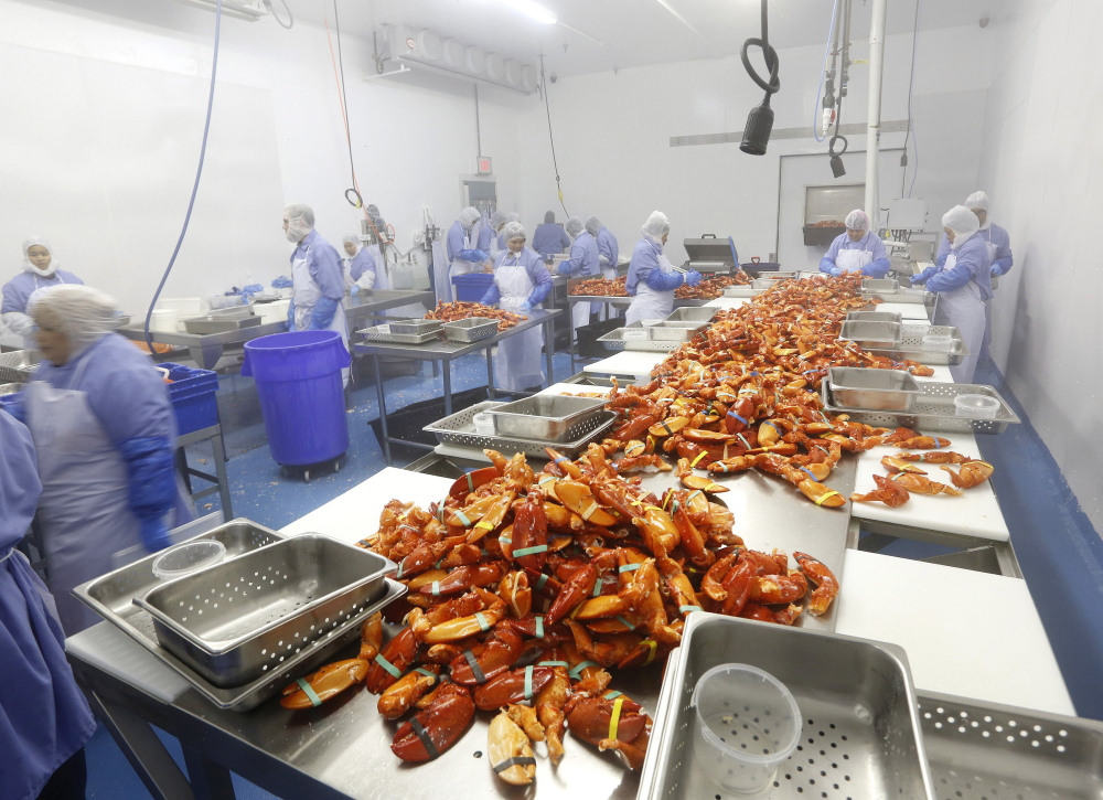 Workers process cooked lobster claws at Cape Seafood, one of several companies that have opened plants or expanded since 2010 to try to add value to Maine's annual $365 million lobster harvest.