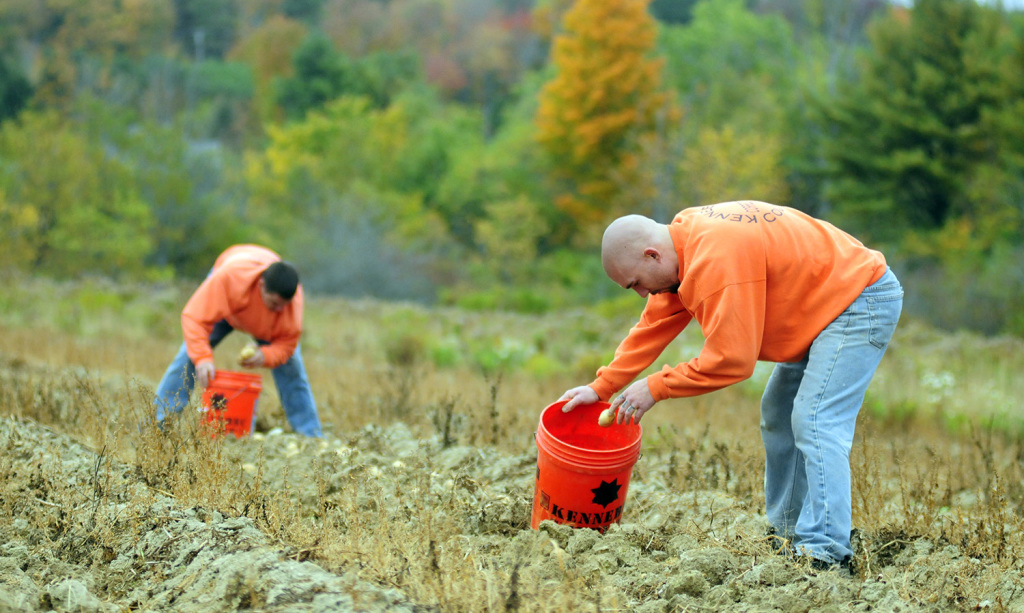 Maine Inmates Dig Into Farming In The Name Of Charity