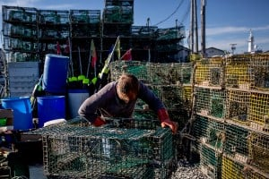 Trent Burnell, a sternman working on Widgery Wharf in Portland, mends traps on a non-hauling day. Burnell said he and his captain had just finished fishing the day before, and needed to give the traps time to fill up before hauling them again. Gabe Souza/Staff Photographer