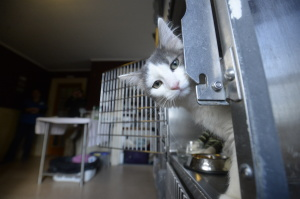 Mystery kitten from New Mexico that somehow ended up in Maine Thursday, Nov. 20 2014.