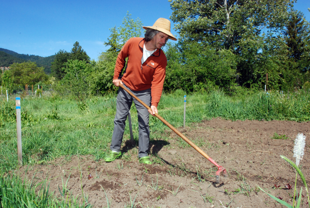 Chuck Burr cultivates a row of onions on his organic seed farm outside Ashland, Ore. An Oregon ballot measure to require labeling of genetically engineered foods was narrowly defeated Tuesday.