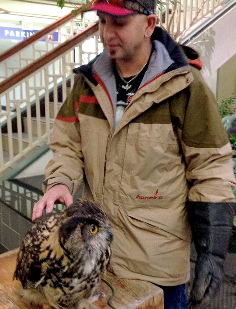 This European eagle owl attacked another bird, a Harris's hawk, both part of the presentation of Talons! A Bird of Prey Experience. The display was set up near the fireplace at the University Mall lower level in Burlington, Vt., Friday  as part of the grand-opening celebration for L.L. Bean.