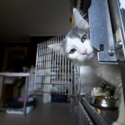 Spice, the 6-month-old kitten found in a duffel bag outside a Portland thrift shop this month, is living at the Animal Refuge League in Westbrook.