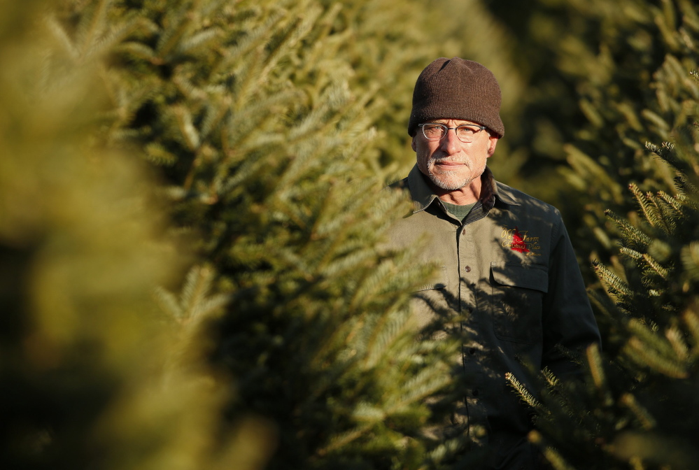 """Jay Cox has been selling Christmas trees at The Old Farm Christmas Place in Cape Elizabeth for five years. """"If you cut the tree, take it home and get it in water right away, it's going to last a long time,"""" he said."""