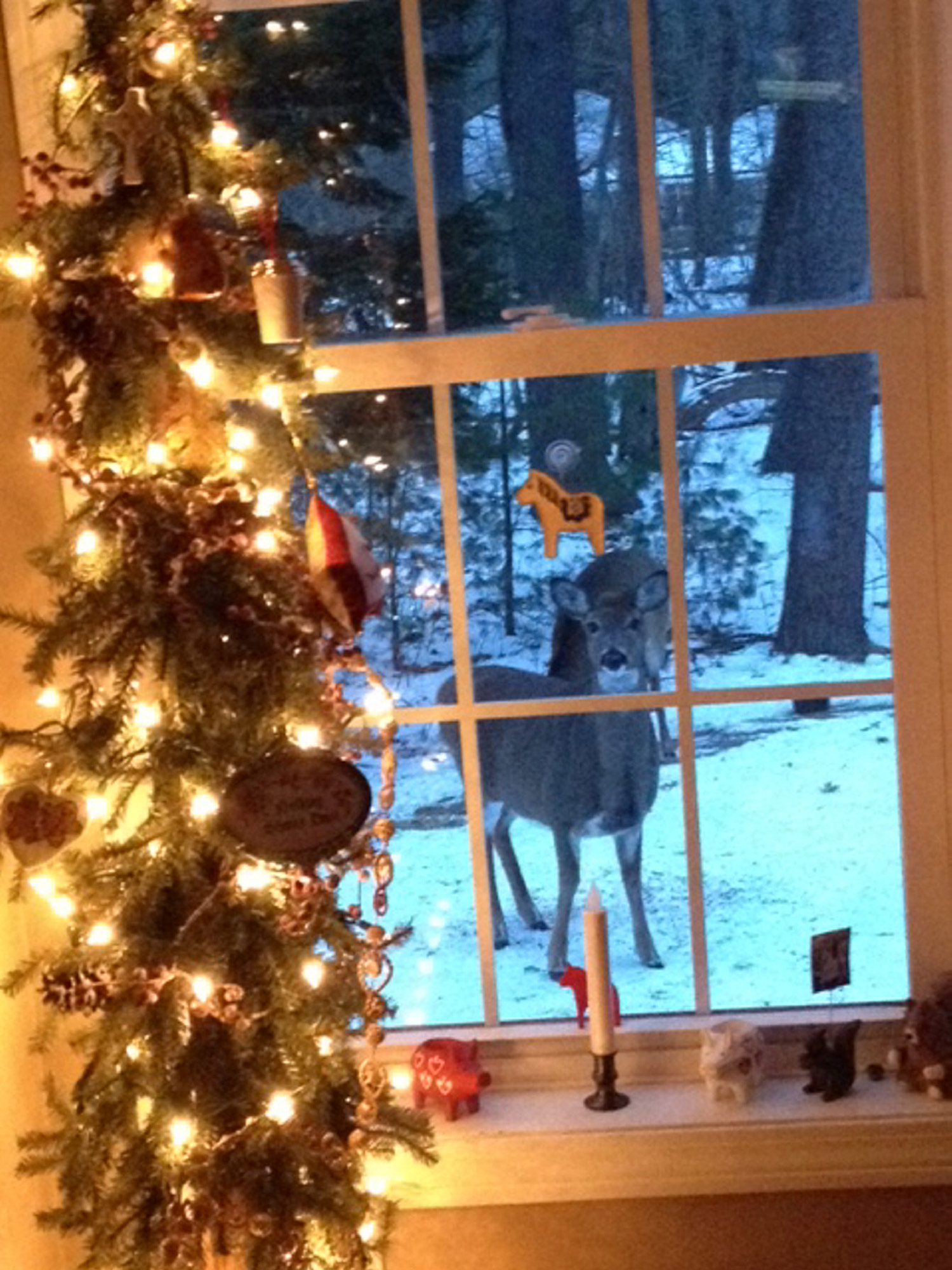 So where's Santa? Sliding down the chimney a little early at this Gorham home? And shouldn't those deer be on the rooftop?