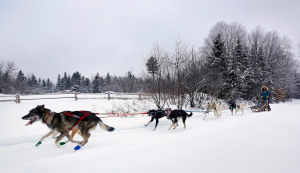 Patterson and her team of dogs train for the Cam-Am Crown 250-mile dog sled race.