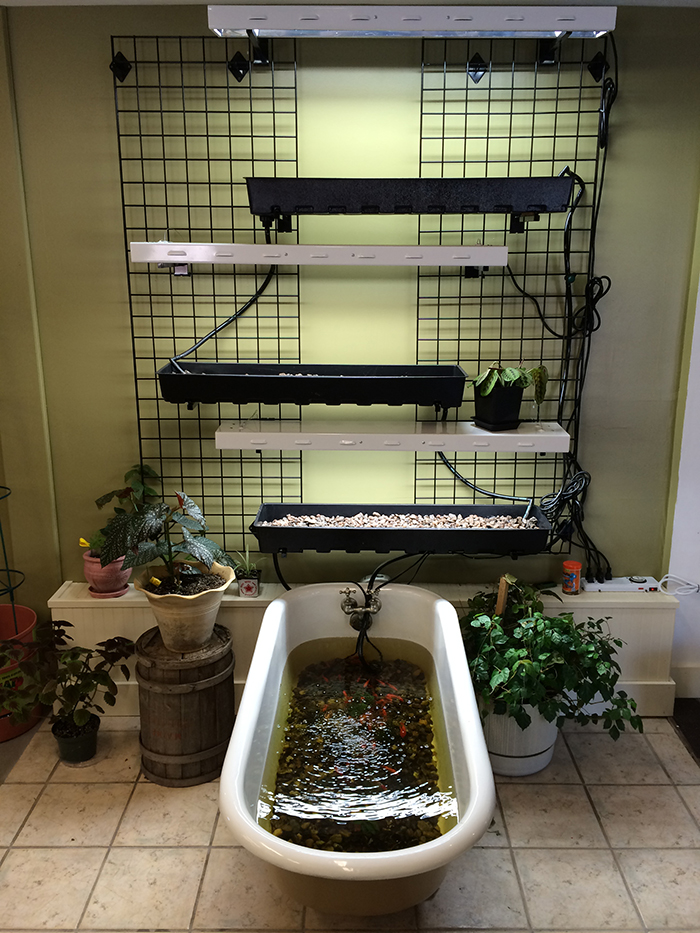 High Wire Hydroponics' Sean Hegarty says he  liked the vintage claw-foot tub because