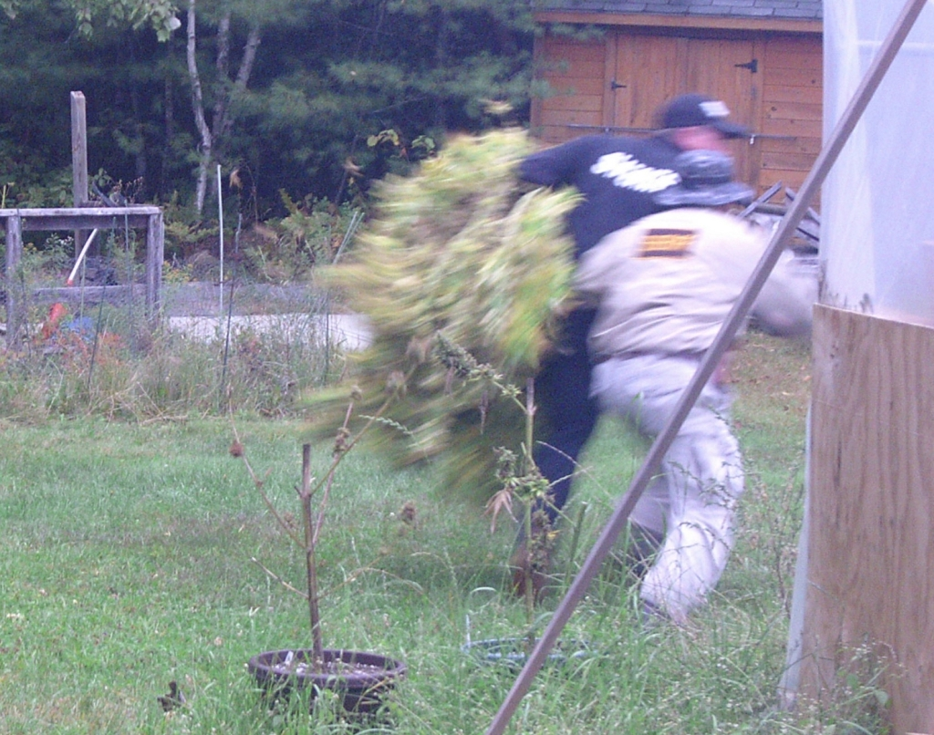 An image from a security camera shows thieves running off with a mature marijuana plant from a licensed grower in Winterport in September.