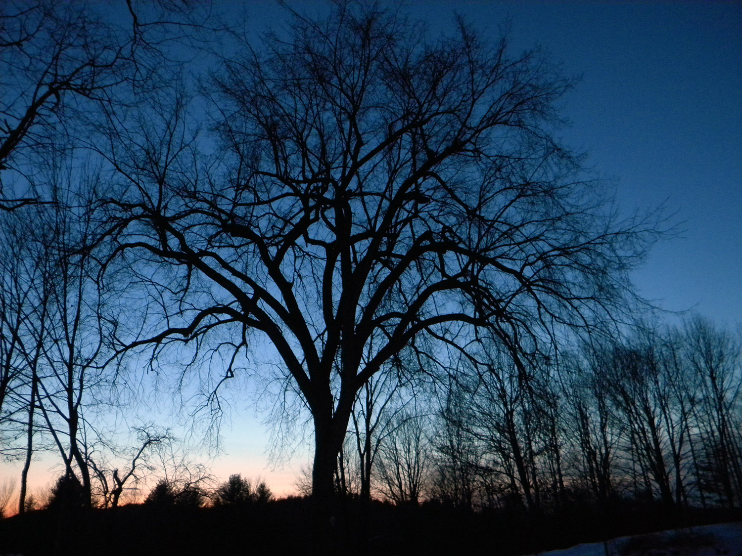 It's a less dramatic but still a lovely sunset at the farm of Scott and Patty Wright, where a very old dutch elm stands the test of time – as all must when time seems to stand still.