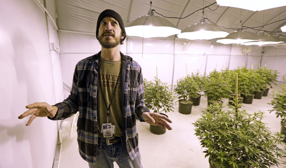 Fitz Couhig, a partner in Pioneer Production and Processing LLC, talks Tuesday about the state's pot surplus in the company's marijuana growing facility in Arlington, Wash. A big harvest of sun-grown marijuana from eastern Washington last fall flooded the market, and prices in the state's marketplace have started to fall.