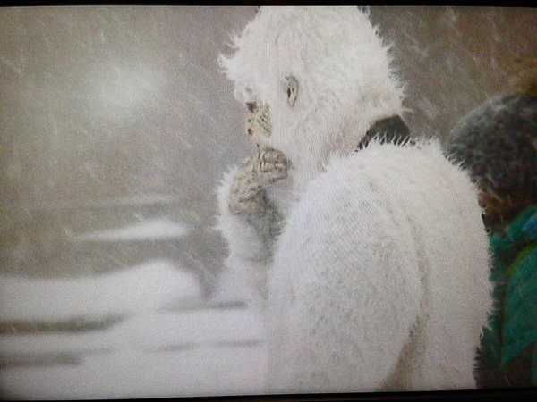 New England Cable News reporter Tony Sabato tweeted this photo of the fabled creature.