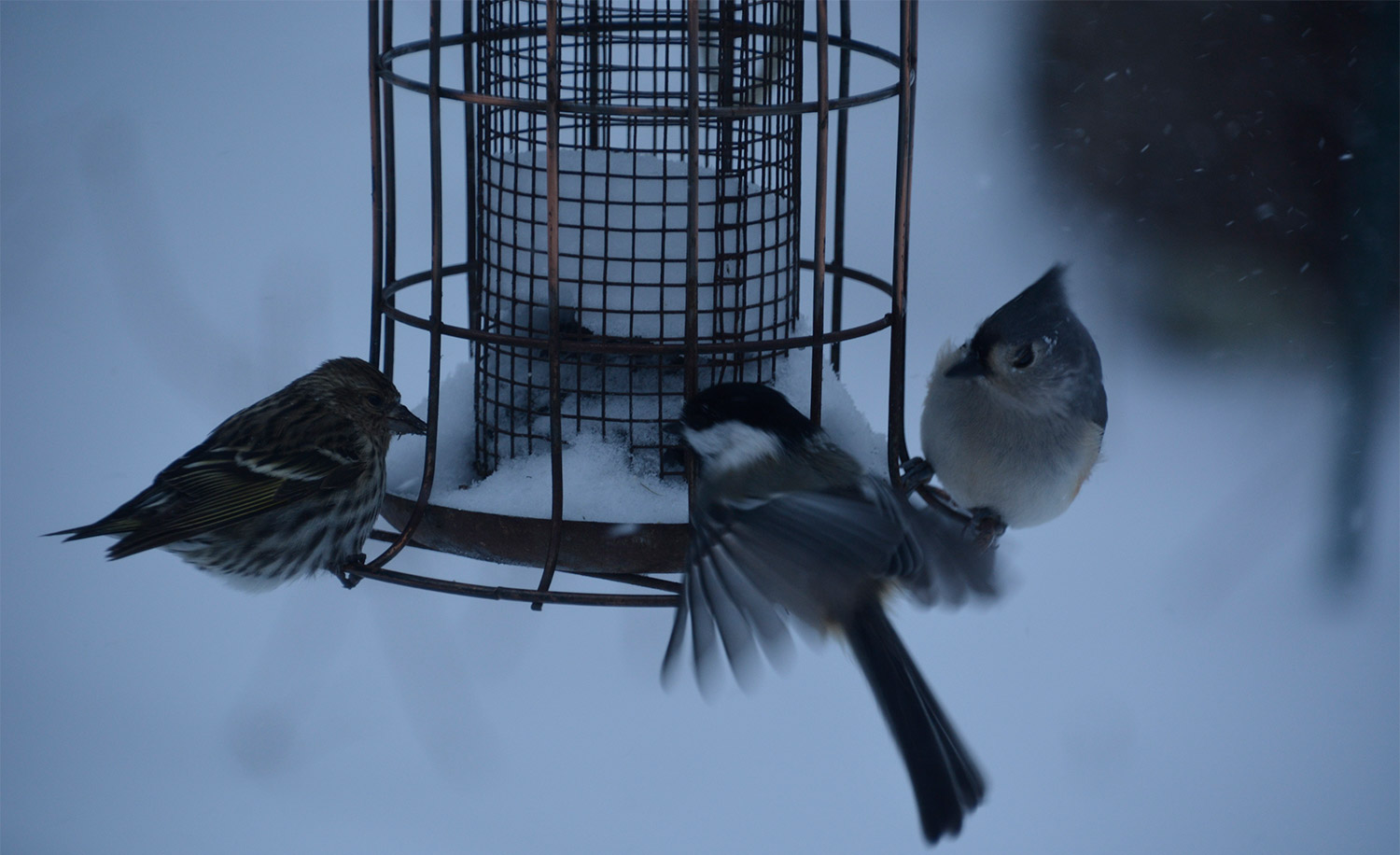 The suet was cold at Francis Baldwin's feeder in Naples, but still helped sustain a trio of little birds, while a fourth seat at the table went vacant. Needless to say, the birds are hoping Baldwin fills up that feeder – and soon.