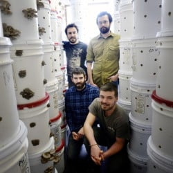 The North Spore gang in the fruiting room in Westbrook. Front row, from left: Co-founder Eliah Thanhauser and employee Jason Barton. Back row, from left: Co-founders Matt McInnis and Jon Carver.