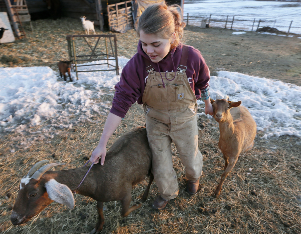 Ellie Olson leads goats to the milking building on her farm near Madrid, Iowa.