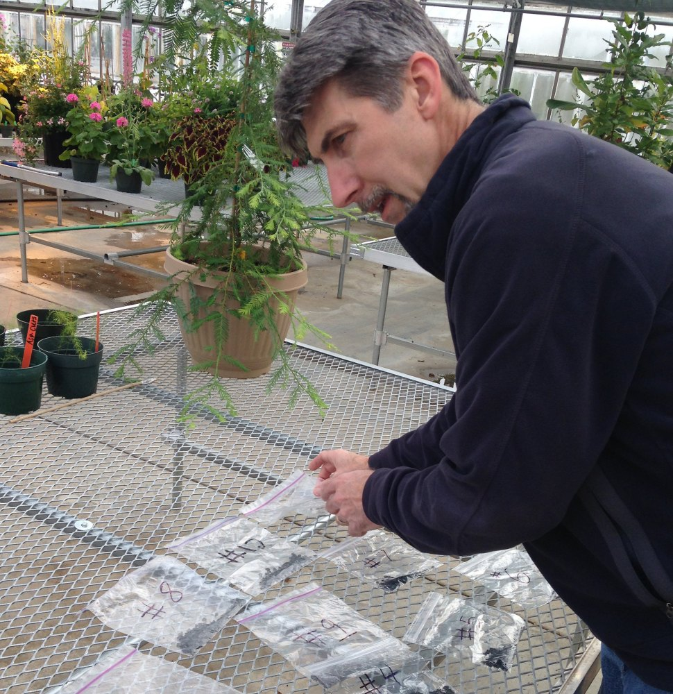 Mike Palmer checks seeds from the agave that flowered last year in Ann Arbor, Mich. The photo at top right shows pods from the 20-plus-foot-tall plant, right.