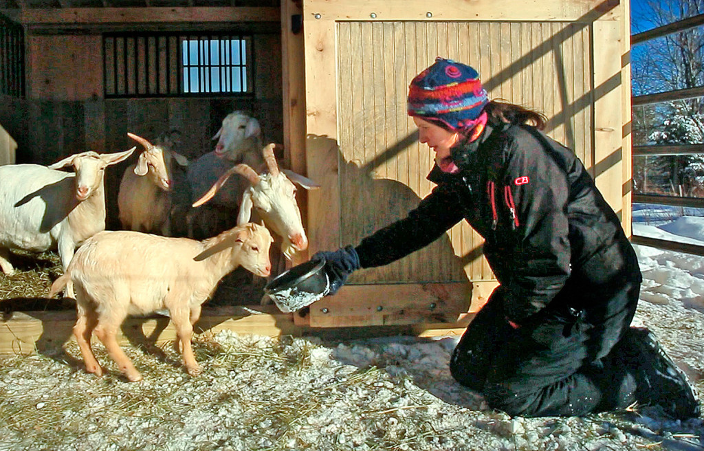 Daniella Tessier of Peace Ridge Sanctuary in Penobscot feeds goats last month after she rescued them from a barn in Aroostook County where they were living up in the rafters on top of a large pile of manure.