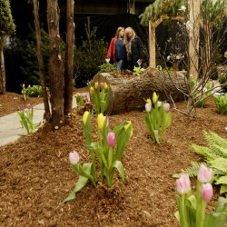 """Deborah Casey, left, and Jane Mack of Cape Elizabeth look over a display by Zach Campbell of Campbell's Landscape & Design at the Portland Flower Show on Friday. The two make the flower show an annual outing, Mack said. """"We pretend we just got off a plane in Miami Beach."""""""