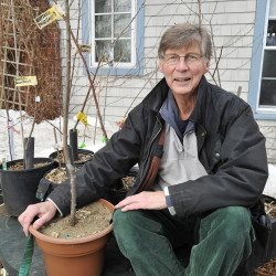 Robert McIntyre with Harpswell Heritage Apples saplings that are sold to benefit community groups in Harpswell and to help sustain 100- to 200-year-old apple trees.