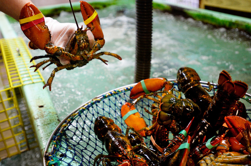 Frigid February may put Maine's lobster harvest on ice for a while - The Portland Press Herald ...
