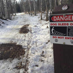 Bare patches of grass and mud on sled dog trails in Anchorage, Alaska.