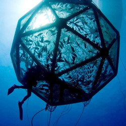 Neil Sims' company, Kampachi Farms, has been developing a cage with Lockheed Martin that can 'grow fish with literally no footprint on the oceans,' he says. Here, the fish are  stocked into the Velella Beta-test array in Kona, Hawaii. Jeff Milisen/Kampachi Farms