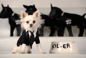 Rocco poses in a Leo tux, inspired by one worn by actor Leonardo DiCaprio to the Oscars, at Little Lily in Los Angeles. Pet fashion label Little Lily has designed a range of dog clothes inspired by the actual gowns worn by A-listers on the Oscar red carpet.