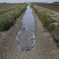 An irrigation ditch running between rice farms in Richvale, Calif., contains very little water. The drought in that state has been worsening.