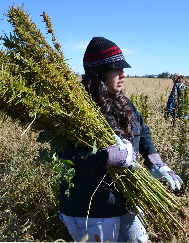 Related to marijuana, hemp is making a comeback and is the subject of a convention.