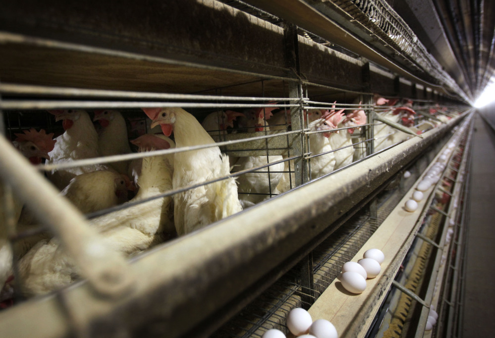 Poultry farms in Iowa, like this one near Stuart, are taking steps to protect their flocks from bird flu. Farm workers in the nation's top egg-producing state are dipping their boots in disinfectant before entering barns, while upgraded ventilation systems help to keep wild birds out of barns.