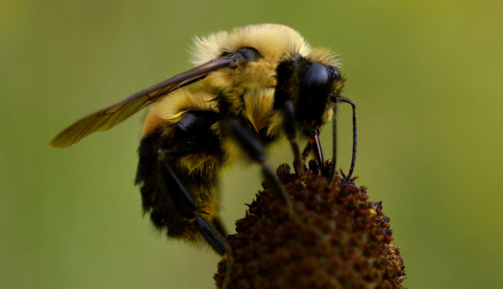 The severity of the effects of neonicotinoid insecticides on bees appears to vary depending on what type of crops or plants they are used on, according to a study by the U.S. Environmental Protection Agency.