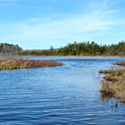 The channel between Pitcher and Knight ponds in Northport offers a glimpse of a quiet area teeming with wildlife.